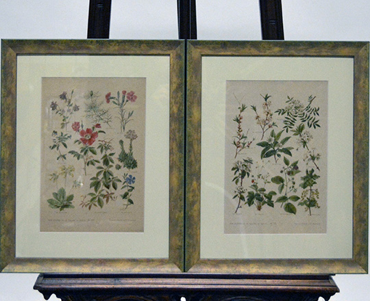 Lot 382_2: Three pair of framed floral  theme prints.